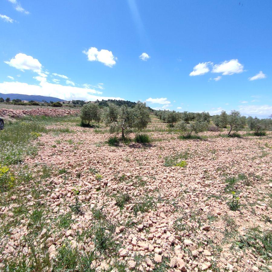 Venta de terreno en El Pinós