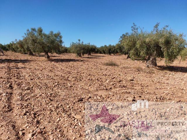 Venta de terreno en Algueña