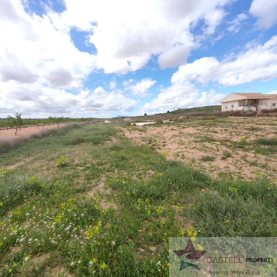For sale of rural property in El Pinós
