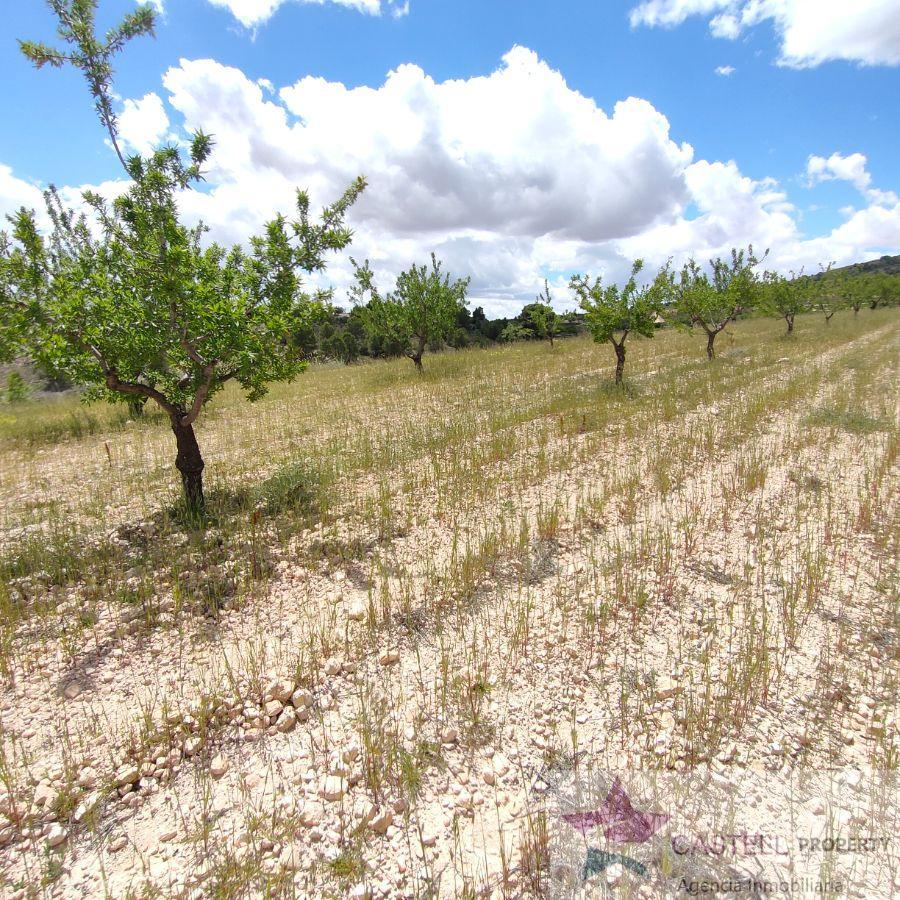 Venta de terreno en Yecla