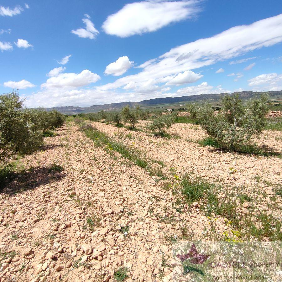 For sale of land in Yecla