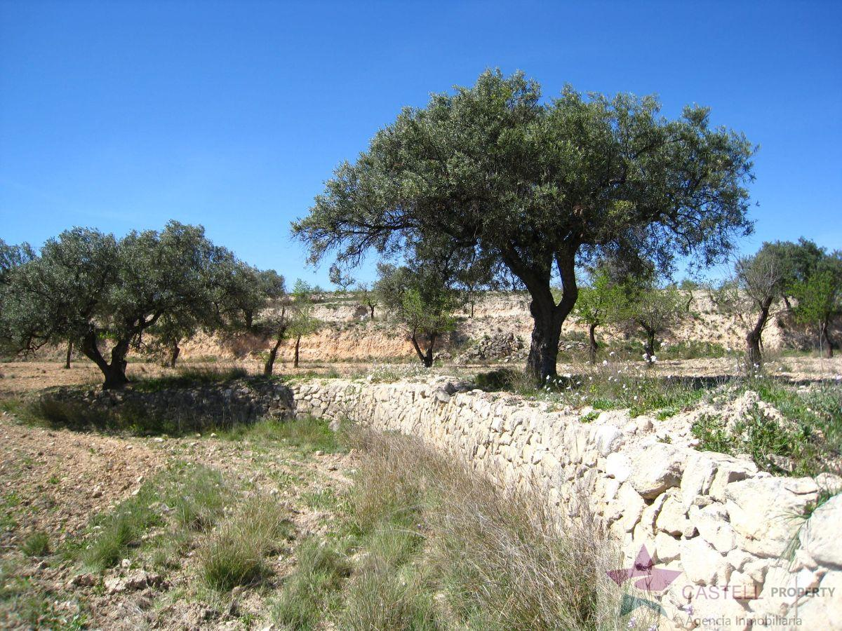 For sale of land in Petrer