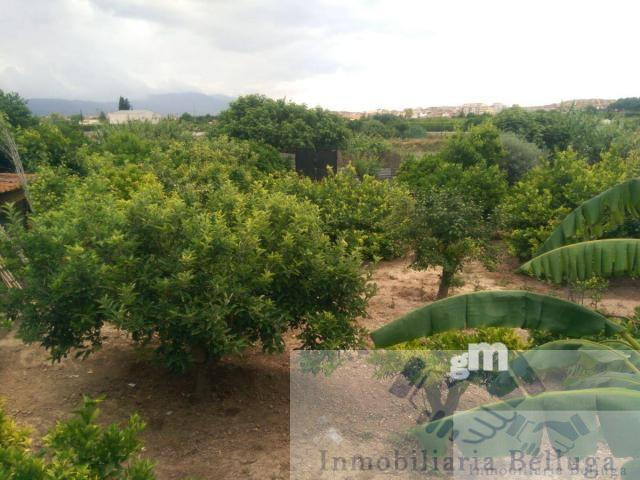 For sale of  in Javali Viejo