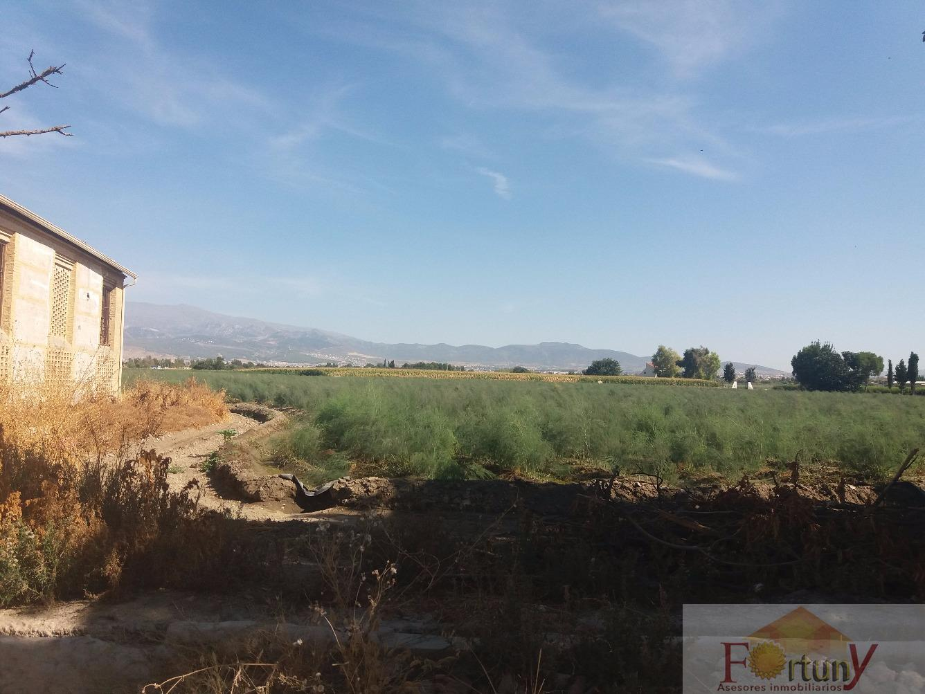 Venta de finca rústica en Granada