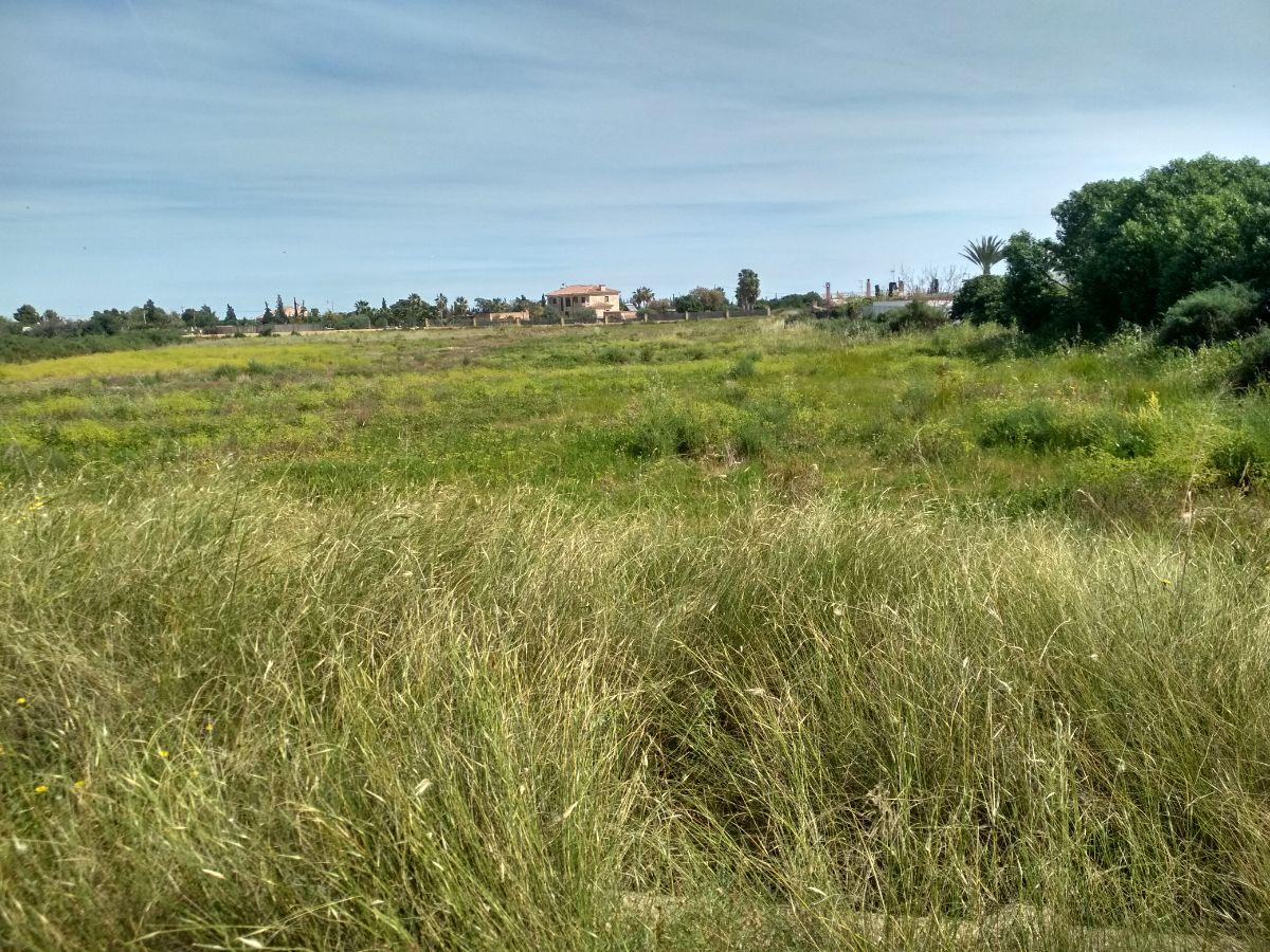 Venta de terreno en Elche-Elx